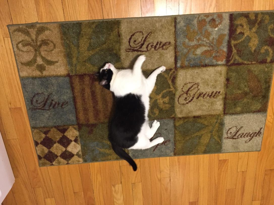 petting rug